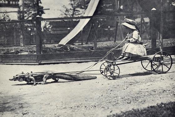 Crocodile-cart