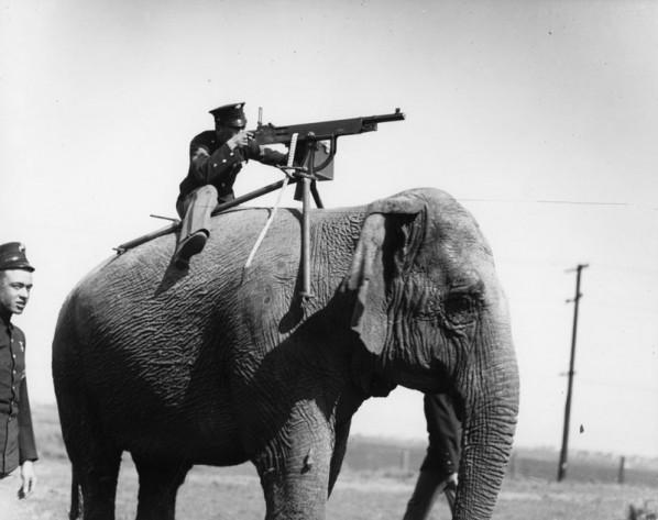 Elephant-598x473
