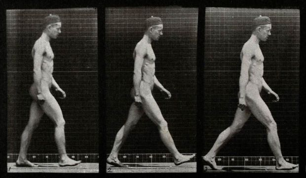 A-man-walking.-Collotype-after-Eadweard-Muybridge-1887-CC-BY-NC