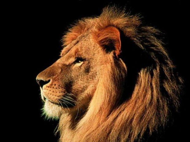leone4