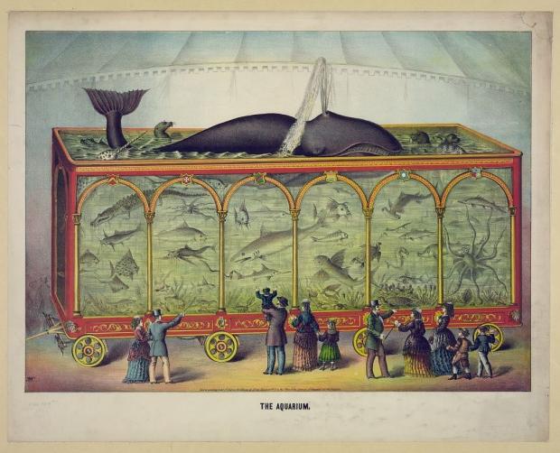 L'acquario del circo