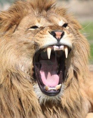 leone-ruggente