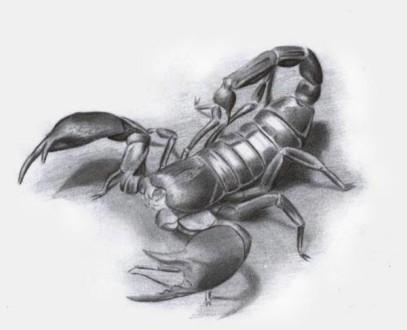 Scorpione (15)