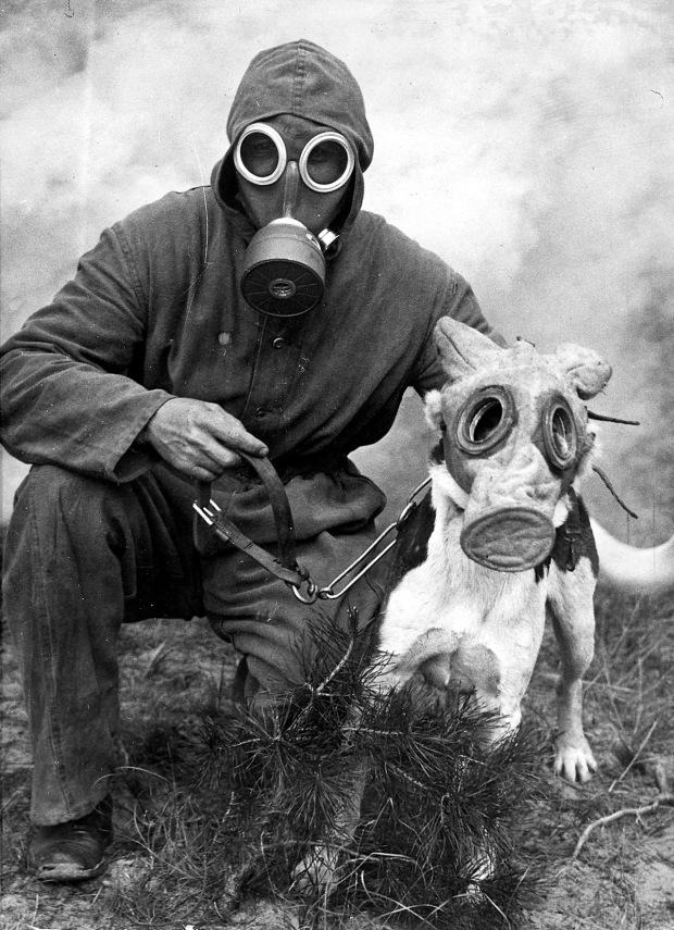 (GERMANY OUT) Rescue services Air-raid warden with his dog, both are wearing gas masks - Vintage property of ullstein bild (Photo by ullstein bild/ullstein bild via Getty Images)