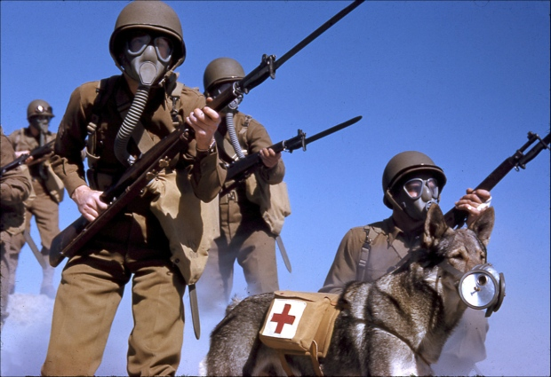 Soldiers and dog with gas masks advance during military training against a possible gas attack, 1943. California, USA. Photo by The Frank S. Errigo Archive/Getty Images