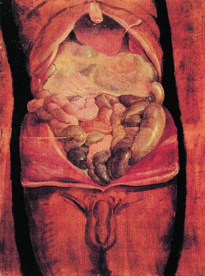 Figure-5-Tabulae-Anatomicae-Pictae-by-Fabricius-From-Premuda-L-editor-I-secoli