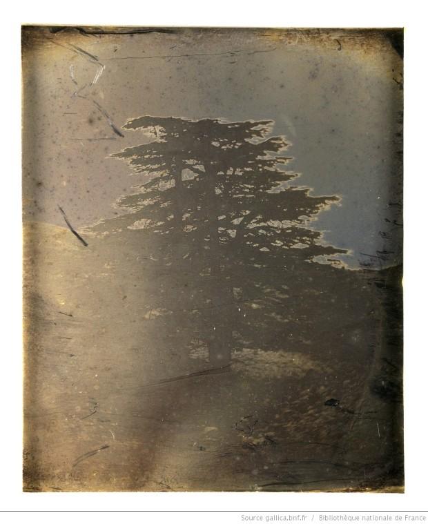 liban_les_cedres_-_photographie_-girault_de_btv1b6902872q