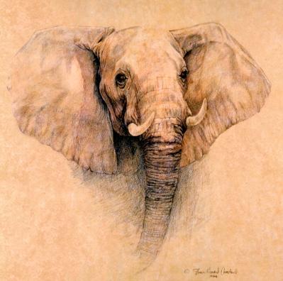 AfricanElephant