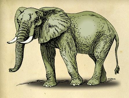 elephant-937976__340