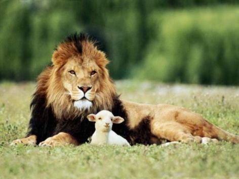 leone-pecora