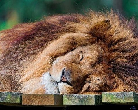 leone10
