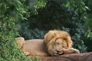 leone11