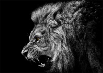 leone5