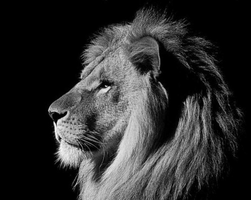 leone6