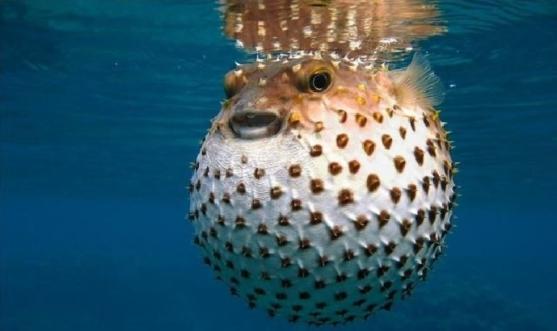 pesce-palla-e-coccodrillo-sulla-tavola-degli-italiani-con-expo-410